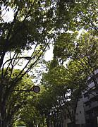 阿佐ヶ谷のけやき並木が好き!