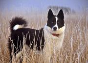 ベアドッグ(クマ対策犬)応援