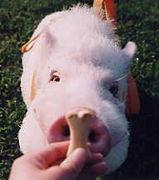 豚豚豚豚豚マニア