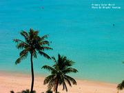 海外旅行に毎年行きたい人