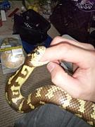 蛇・ヘビの集い