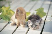 うさ子と猫タン 愛の巣