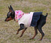 DOG WEAR  HAND MADE K-PIN