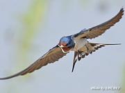 the 野鳥
