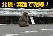 自転車〈北摂/箕面朝練〉