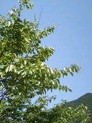 和歌山好きな方!自然愛好会!!