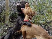 Dog Fighting/闘犬