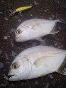 Enjoy Saltwater Anglers in宮崎