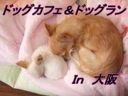 大阪のドッグカフェ&ドッグラン