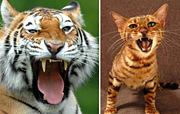 トイガーの会