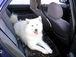 ★犬とドライブ★