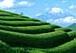 環境と福祉&園芸療法