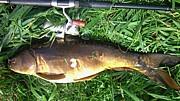北海道鯉釣り隊