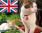 イギリスで猫と生活♪