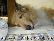 わんこ同伴可のお店-DogOk!