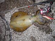 東北のイカ釣り・エギング情報板