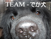 TEAM-でか犬(大型犬) in 北海道
