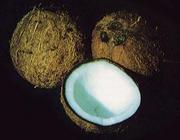 ココナッツ大好き