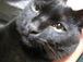 My Love 黒猫