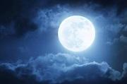 負け犬に月
