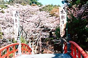 紀州 木の神 伊太祁曽神社