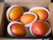 おすすめマンゴー&南国フルーツ