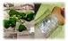 仙人草による扁桃腺治療