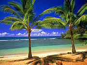 ハワイで流行っているもの!!