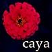 caya/eureka
