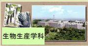 琉球大学 農学部 生物生産学科