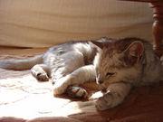 老猫と暮らしています
