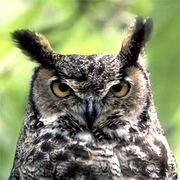 Respect OWL