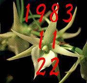 1983年11月22日生まれ