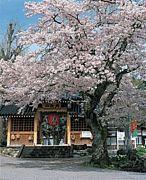 ツーリング仲間募集中☆ TEAM桜