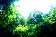 DEEP FOREST -深い森-