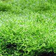 熱帯魚・水草があるという生活