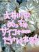 大井川中(昭和62年度生まれ)