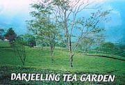 Tea room Camellia