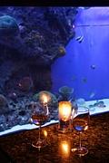 DINING -Seafloor-