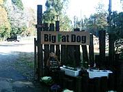 ドッグランパーク Big Fat Dog