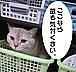 猫でアテレコ