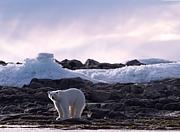 地球の悲鳴 〜 stop地球温暖化