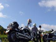 MOTOR CIRCLE  HONEY DOUGHNUT