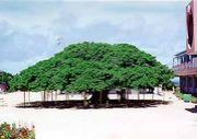 兵庫県在住 沖永良部島2世・3世