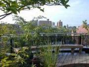 屋上緑化計画