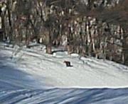 片品村のスキー場 神奈川県支部