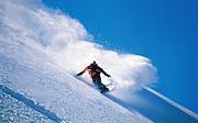 スキーに行きませんか?