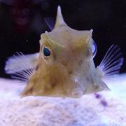 海水魚フグ倶楽部