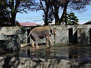 象のはな子と花子の物語