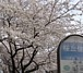 世田谷桜丘まちづくり